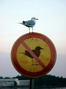 Z_funny_sign_bird