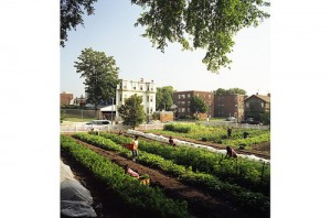 1_urban_farming_03_timemag